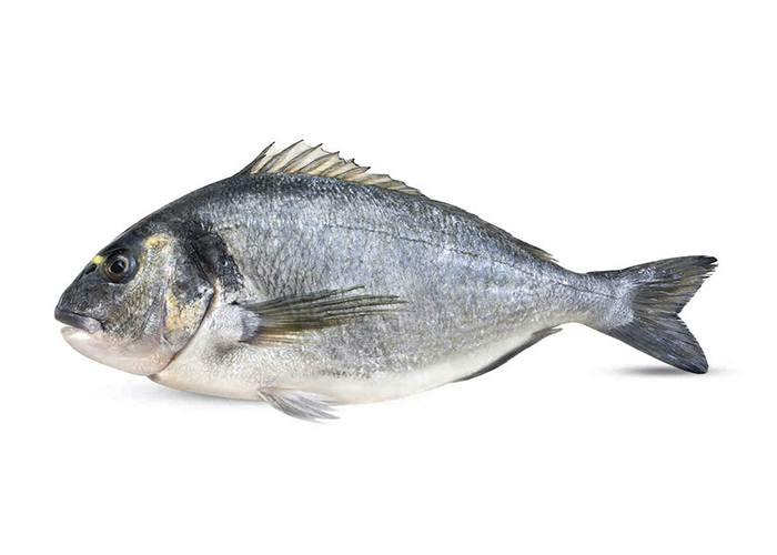 Gilthead sea bream