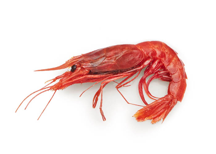 Scarlet shrimp