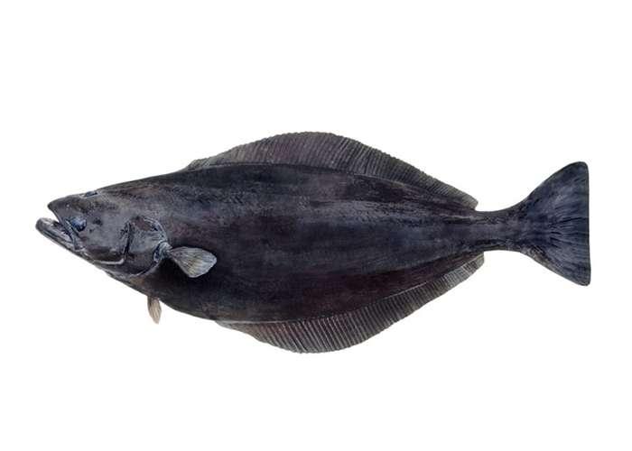 Fletán negro
