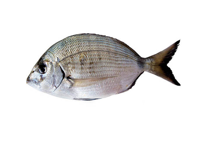 White seabream