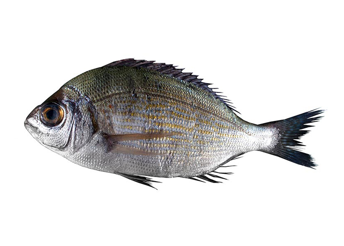 Black sea bream (or Old Wife)