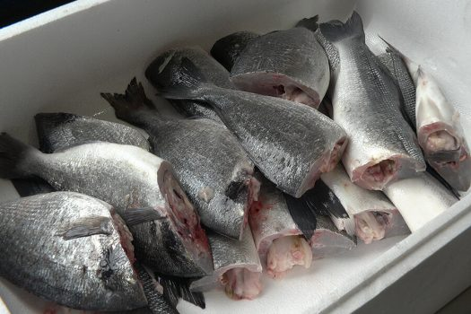jm-458-pescado-descabezado